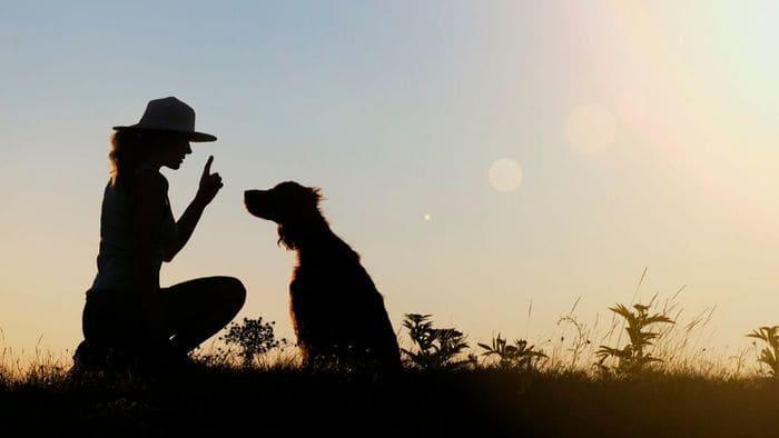 ペットと女性のシルエット